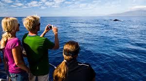 Hawaii travel and leisure images Humpbacks in growing numbers return to hawaii travel weekly jpg