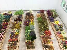 wholesale flowers miami mayesh wholesale florist miami