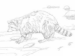 chester the raccoon coloring page kissing hand freebie coloring