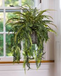 silk plants buy beautiful lush carefree silk and artificial plants for