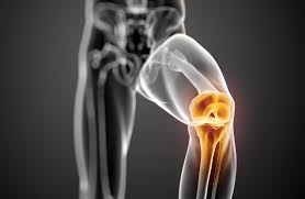 Diagram Of Knee Anatomy Functional Anatomy Of The Knee Movement And Stability