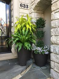Eugenia Topiary Color Dirt Simple