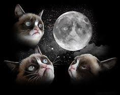 Three Wolf Shirt Meme - read the reviews three wolf moon t shirt with gift box short