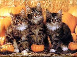 cute cat halloween backgrounds top 7 cats with pumpkins animalblog