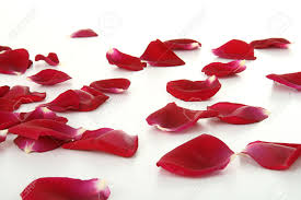 Rose Petals Romantic Red Rose Petals Isolated Stock Photo Picture And