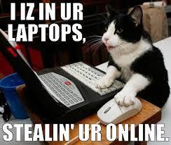 Cat Laptop Meme - laptops computers n stuff beautiful cats pinterest maze cat