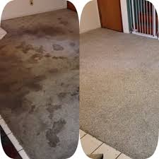 Professional Area Rug Cleaning Maui Professional Carpet Cleaning Inc Home Cleaning Wailuku