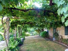 How To Grow Grapes In Your Backyard by The Story Of Our Grape Arbor Tells You How To Make This Simple