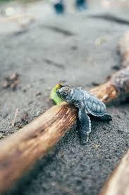 Turtle Planter 615 Best Turtles Images On Pinterest Animals Sea Turtles And