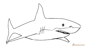 Great White Shark Coloring Pages The Adventures Of Sharkboy And Coloring Pages Sharks Printable