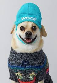 sweater with dogs on it pet clothing digs into function and fashion the denver post