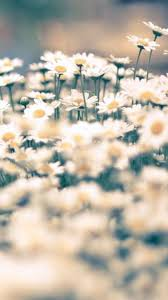 Flower Screen Backgrounds - 66 best home screen backgrounds images on pinterest nature