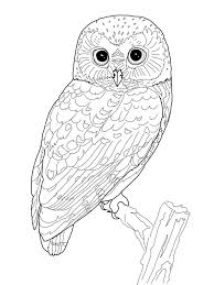 coloring pages of owls fablesfromthefriends com