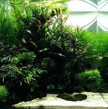 japanese aquascape small aquarium aquascape u2013 homedesignpicture win