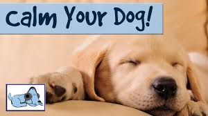music to calm down your dog and stop barking relax my dog youtube