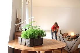 indoor kitchen garden 9 bacsac