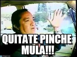 Memes Del Pirruris - quitate pinche mula pirruris meme on memegen