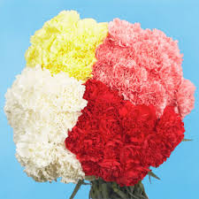 bulk carnations color bulk carnations global