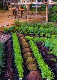creating vegetable garden plans for beginners vegetable
