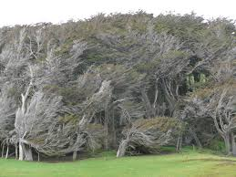 10 oldest and beautiful trees around the world