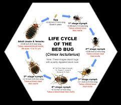 Bed Bugs In Ohio Bed Bug Exterminator Service Northridge Speedy U0027s Pest Solutions