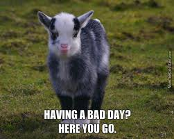 Funny Goat Memes - baby goat memes best collection of funny baby goat pictures
