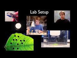 Lab Bench Photosynthesis Ap Bio Lab 4 Plant Pigments U0026 Photosynthesis U2014 Bozemanscience