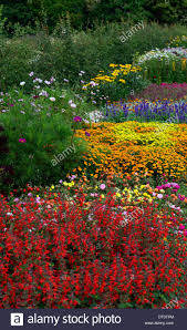 mix mixed flower bed border borders bedding display annuals annual