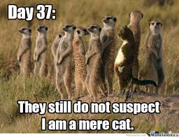 Mere Cat Meme - just a mere cat by jconrady meme center