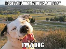 Animal Meme - 50 best animal memes funniest animal memes