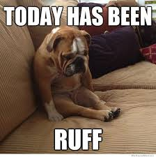 Depressed Pug Meme - 11 national dog day memes that are just as hilarious as they are cute