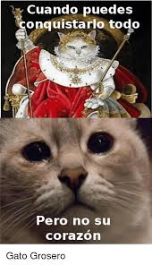imagenes groseras de gatos cuando puedes onquistarlo todo pero no su corazon gato grosero