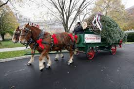 christmas tree delivery the white house christmas the enchanted manor