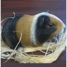 guinea pig pet pal garden ornament the garden factory