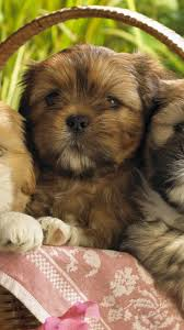 cute puppies 2 wallpapers cute puppies 2 wallpaper 58650