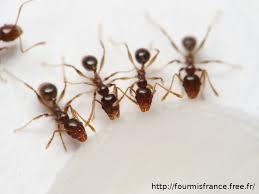 double suivi citrouille mars fourmis france