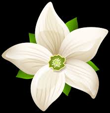 white flower large white flower transparent png clip image gallery