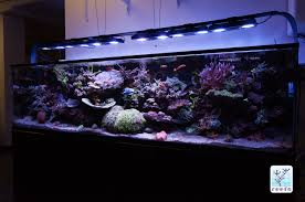Reef Aquarium Lighting Ecotech Marine Radion Gen 4 Xr30w Pro The Definitive Review