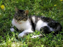 learn about types of pet friendly weed killer