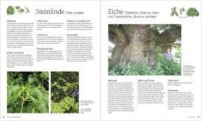 Gebrauchte K Hen Das Große Waldwerk Ideenbuch Amazon De Ben Law Bücher