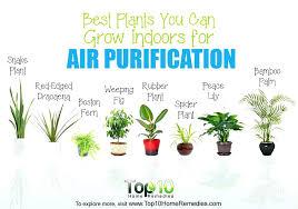 best light for plants best light for growing plants indoors low light plants indoor house