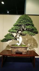pot bonsai design 149 best bonsai images on pinterest bonsai trees bonsai plants