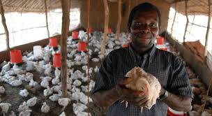 Backyard Poultry In India Current Picture Of Poultry Farming In India 2012 The Poultry Guide