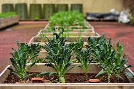 starting your own garden best idea garden