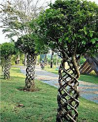 trees amazing trees