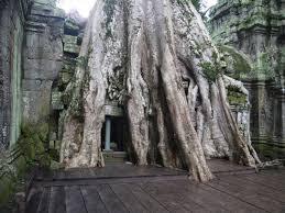 angkor wat angkor thom ta prohm temples siem reap renegade
