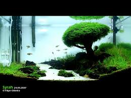 Aquascaping Techniques Iwagumi Aquascaping 4 Just Pretty To Look At Pinterest