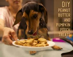 easy homemade halloween treats that will thrill the special pups