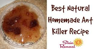 Natural Ant Killer For Kitchen by 500x262xhomemade Ant Killer Facebook Image Jpg Pagespeed Ic Gbxmltmsk9 Jpg