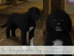sims 3 australian shepherd template dog u0027